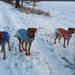 Sníh se u nás zastavil jen na skok