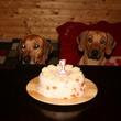 Nechápeme, proč je ten dort na stole