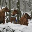 Poslední dobou tradiční prochajda s Fančou, Meginkou a Tabi ve Štěchovicích