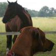 Já a kůň