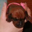 Růžová holčička je Pavlova mazlinka :-)