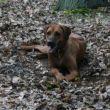 Fanča je nejšťastnější doma v horoměřickém lese