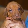 Puppy boom v SVP